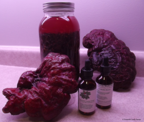 Reishi Extracts